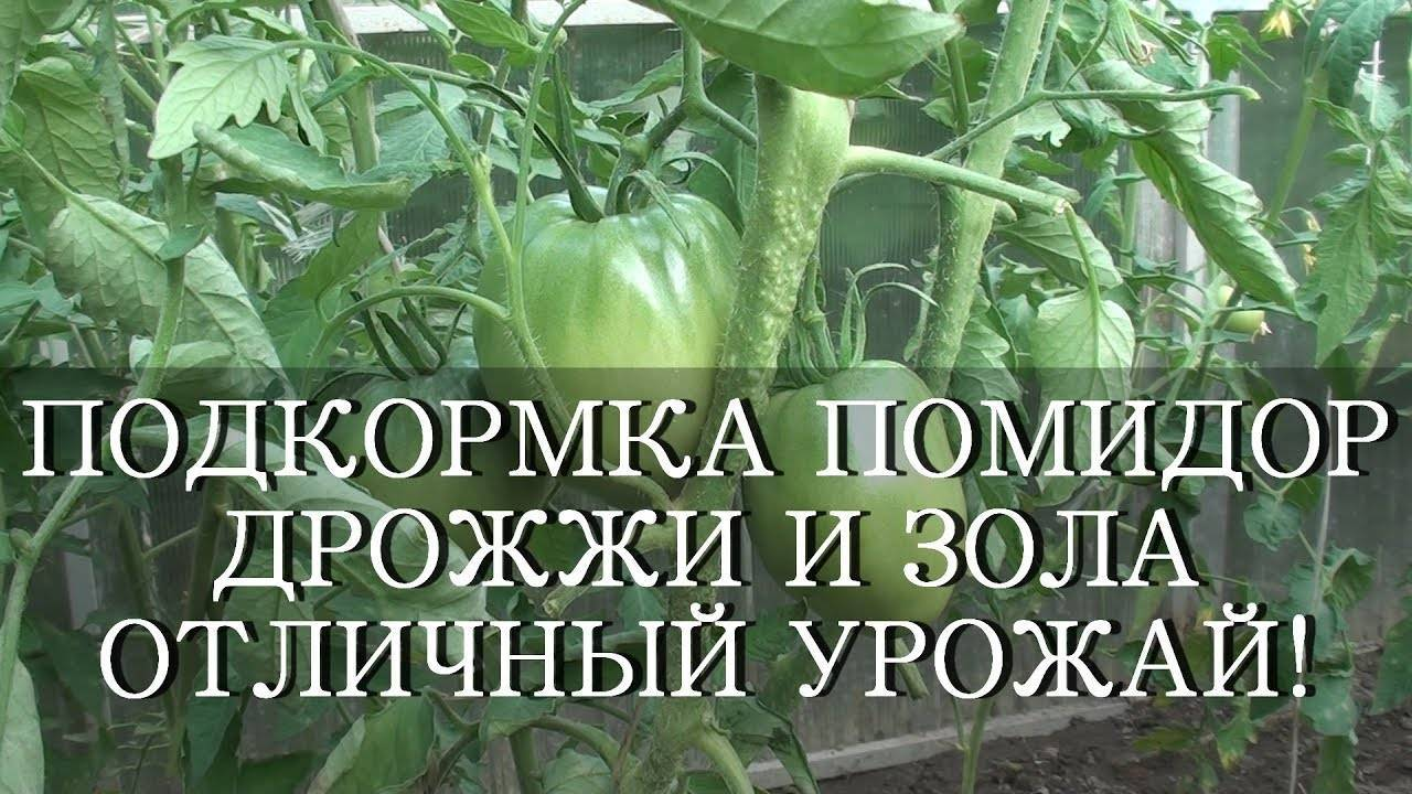 Подкормка помидор дрожжами в открытом грунте