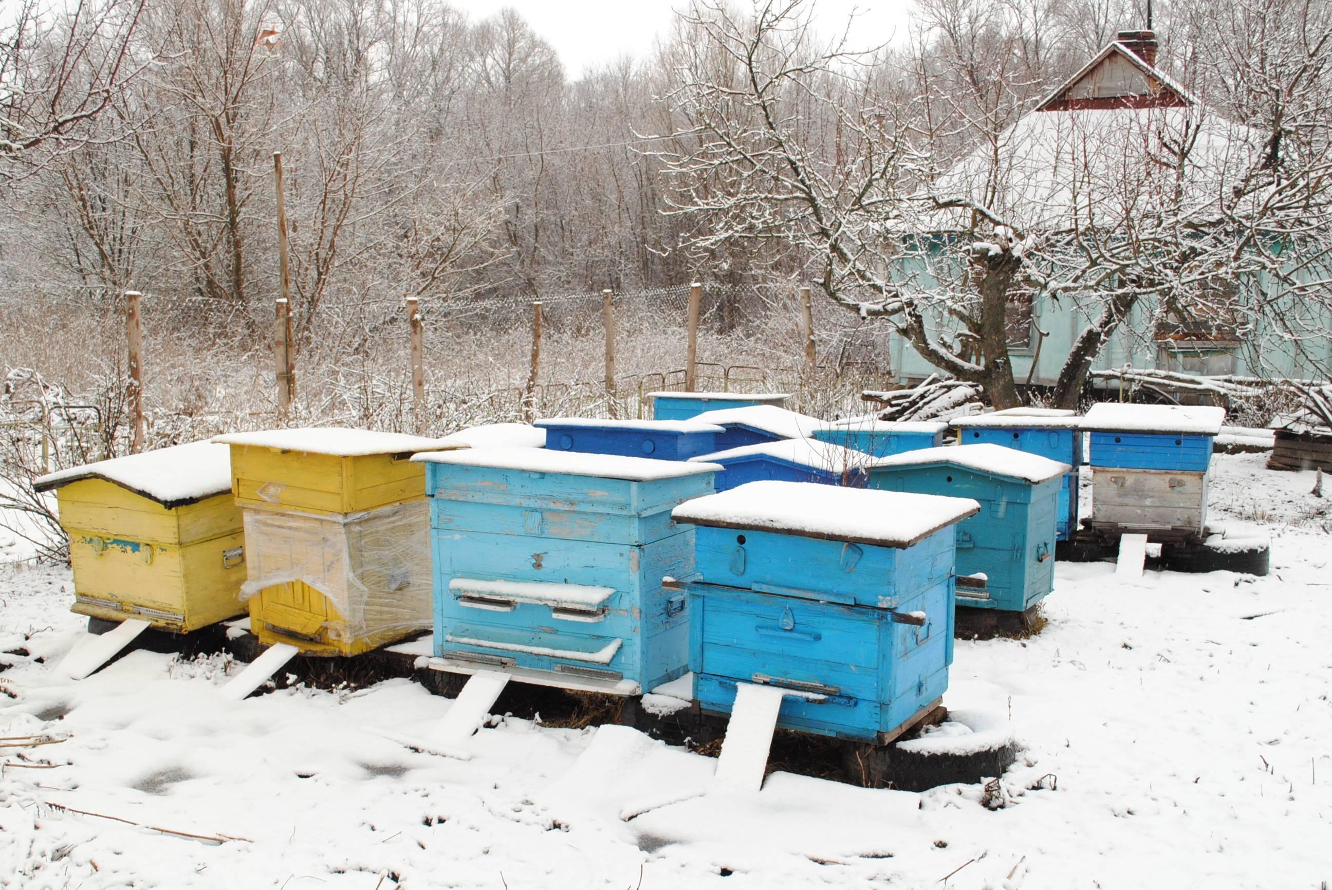 Как правильно подготовить пчел к зимовке