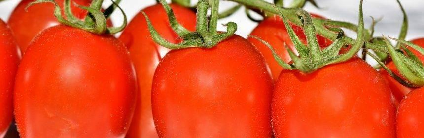 Подготовка семян к посеву на рассаду | топ огород