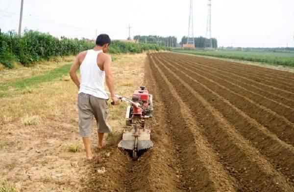 Выращивание картофеля в мешках: пошаговая инструкция