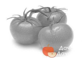 Волгоградец томат описание. помидоры волгоградец: описание сорта, отзывы и фото