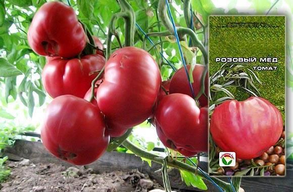 Очень ранний сорт крупноплодных томатов «большая мамочка»: описание характеристик, советы по выращиванию