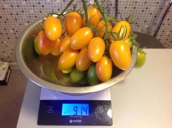 Раннеспелый высокоурожайный сорт томата джекпот