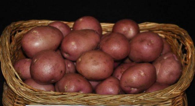 Выращиваем картофель, сорта и окучивание
