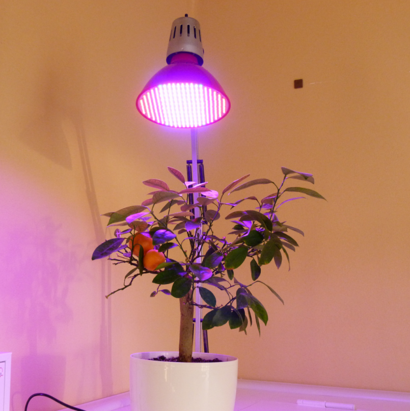 Полный обзор ламп для рассады — инструкция по использованию