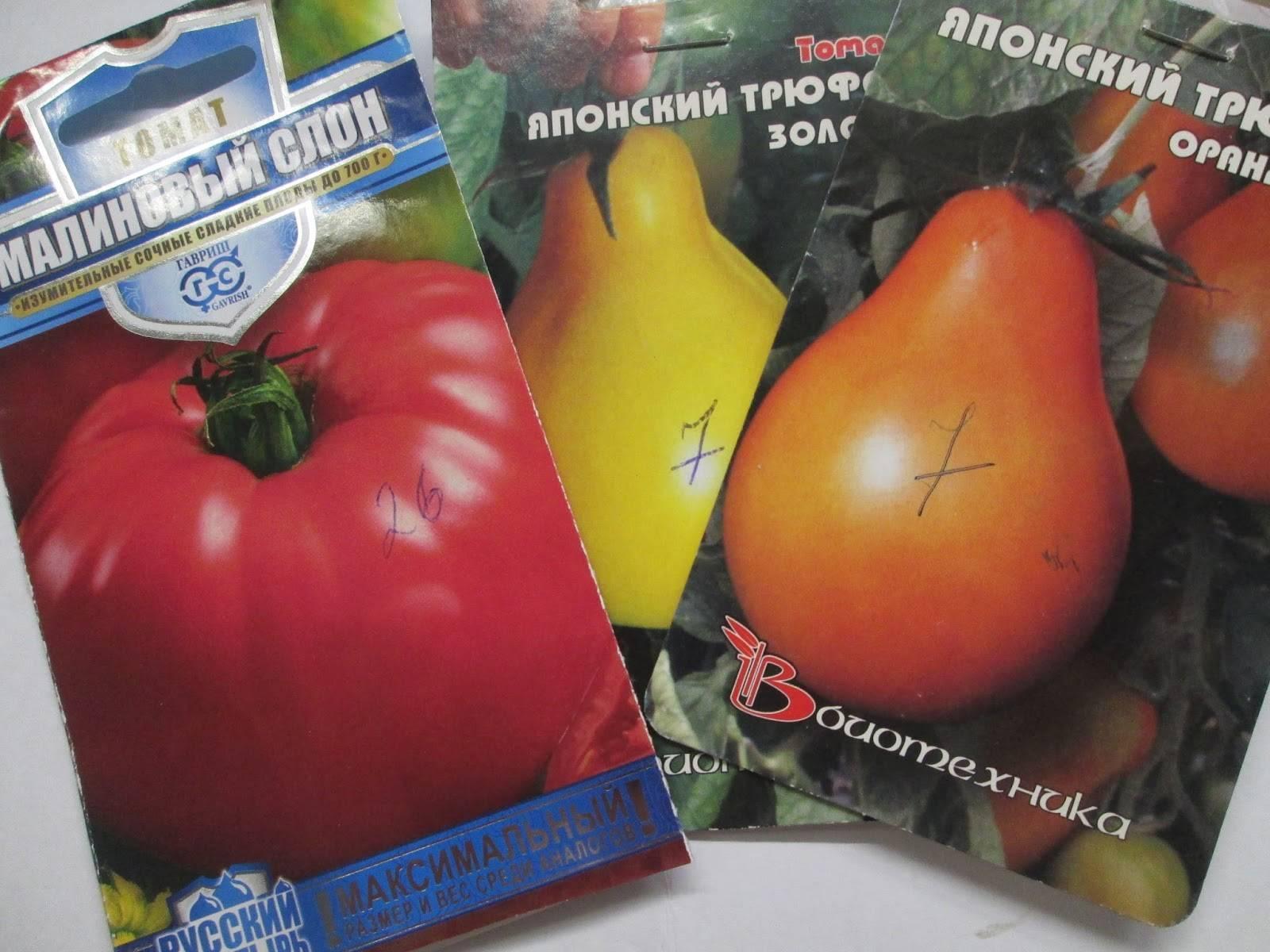 Крупные сорта помидор для открытого грунта