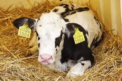 Правила введения витаминов для скота в основной рацион, нормы для разных видов коров