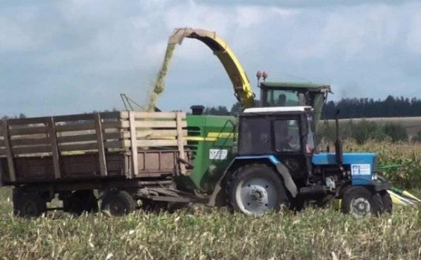 Возделывание кукурузы на силос и зерно
