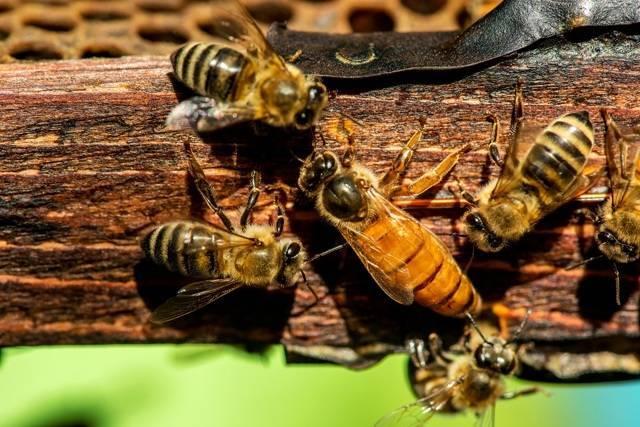 Использование суши для пчел