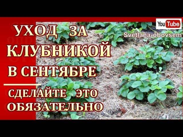 Выращивание топинамбура – особенности агротехники на даче