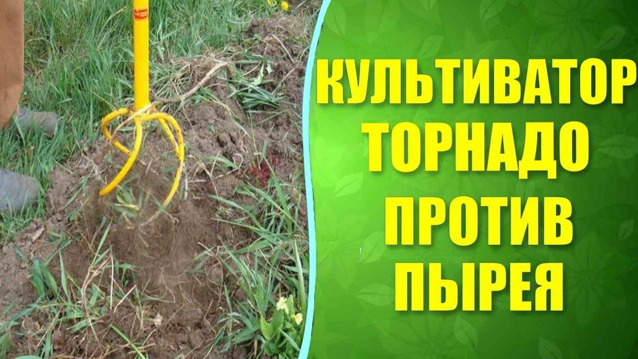 Как избавиться от пырея на участке навсегда: как вывести ползучий с огорода навсегда, как выглядит трава, меры борьбы сидератами и народными средствами
