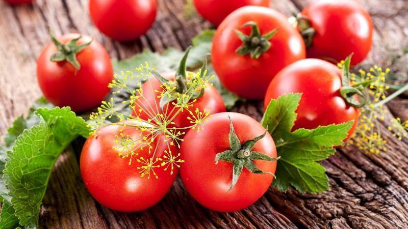 Чем обработать землю после фитофторы помидор