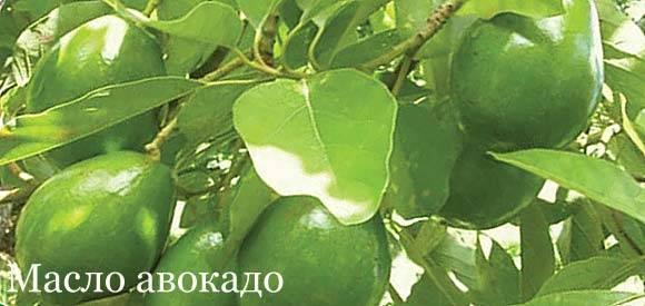 Масло авокадо: применение масла авокадо в лечении заболеваний