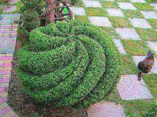 Как пересадить тую весной или осенью на другое место: взрослую, большую, маленькую