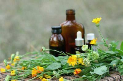 Лечебные свойства и противопоказания к употреблению рододендрона