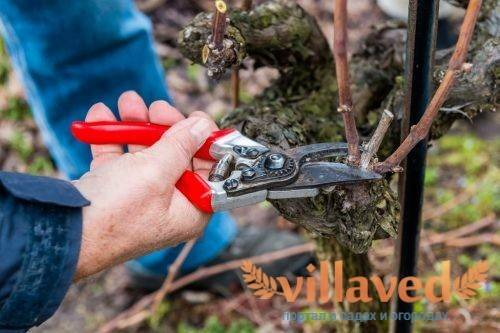 Как ухаживать за грушей осенью: правильная подготовка дерева к зиме