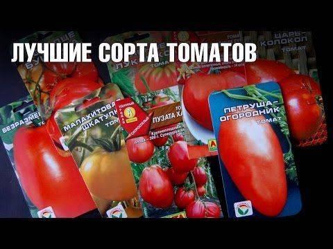 Томаты: подбираем устойчивые к фитофторе сорта