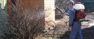 При какой температуре можно поливать смородину кипятком. когда и как проводить обработку кустов смородины кипятком весной