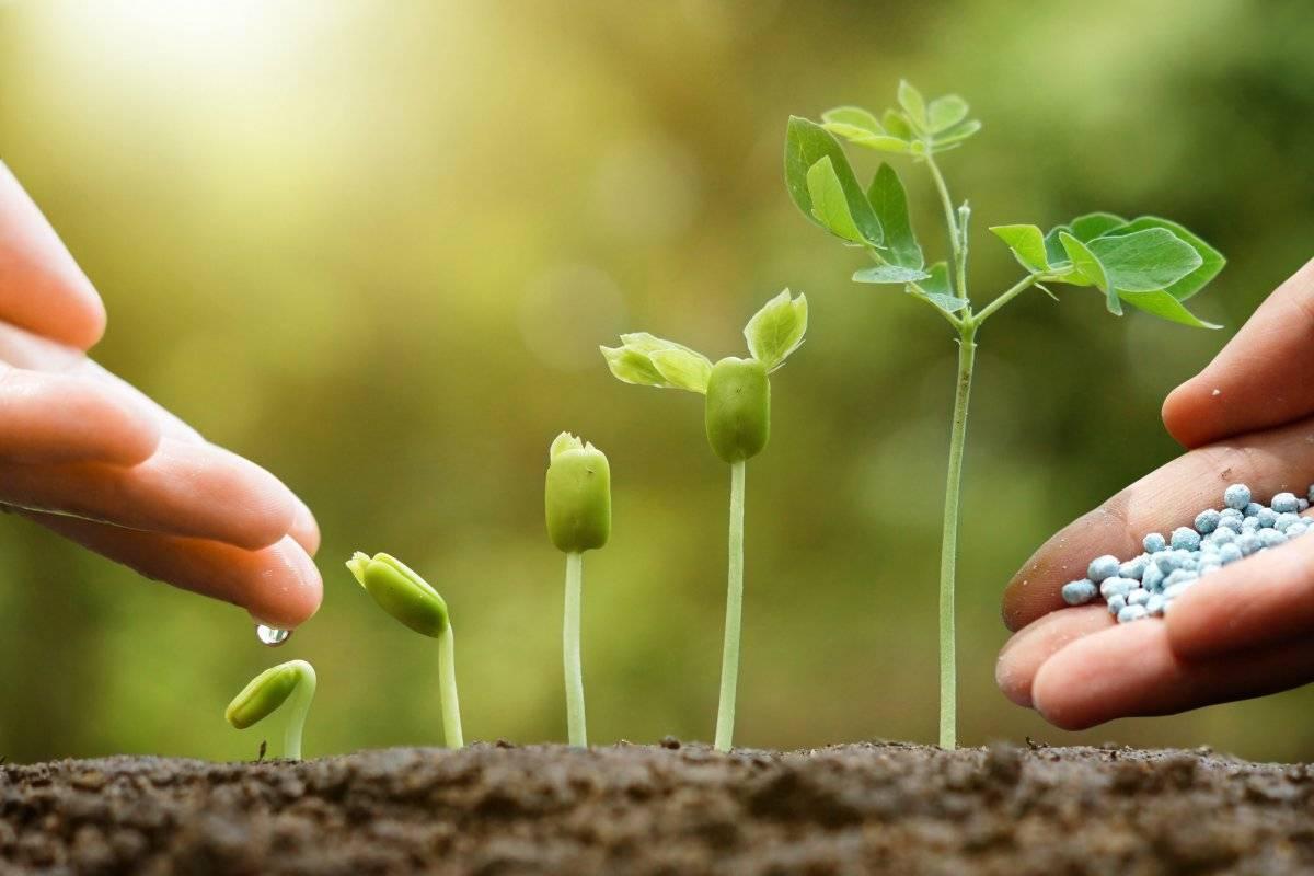 Идеальное удобрение существует – просто нужно уметь его выбрать!