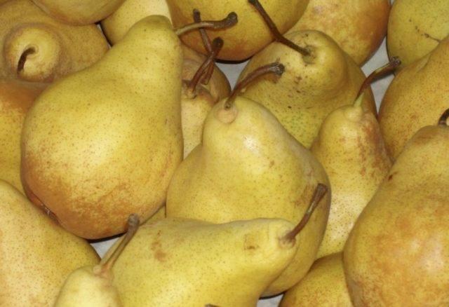 Описание и разновидности группы сортов груши бере