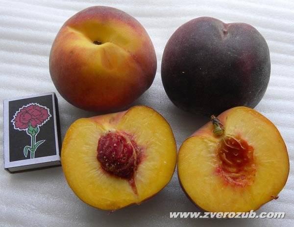 Персик — полезные свойства и сорта