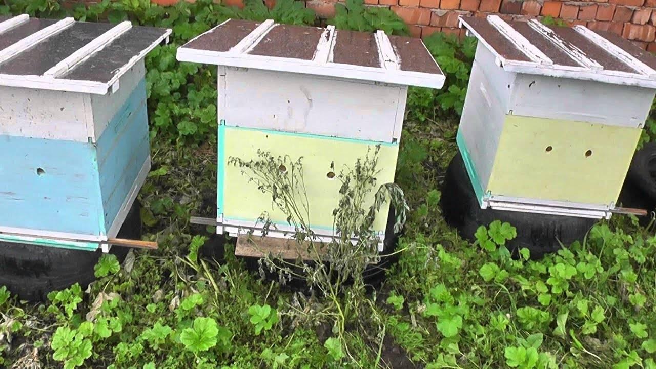 Как сделать отводок пчел в августе