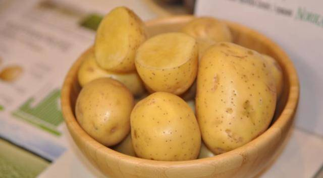 Картофель красавчик — описание сорта, фото, отзывы, посадка и уход