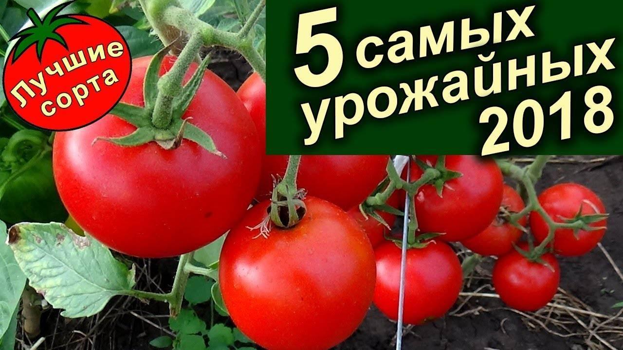 Самые урожайные сорта томатов для теплицы и открытого грунта | красивый дом и сад