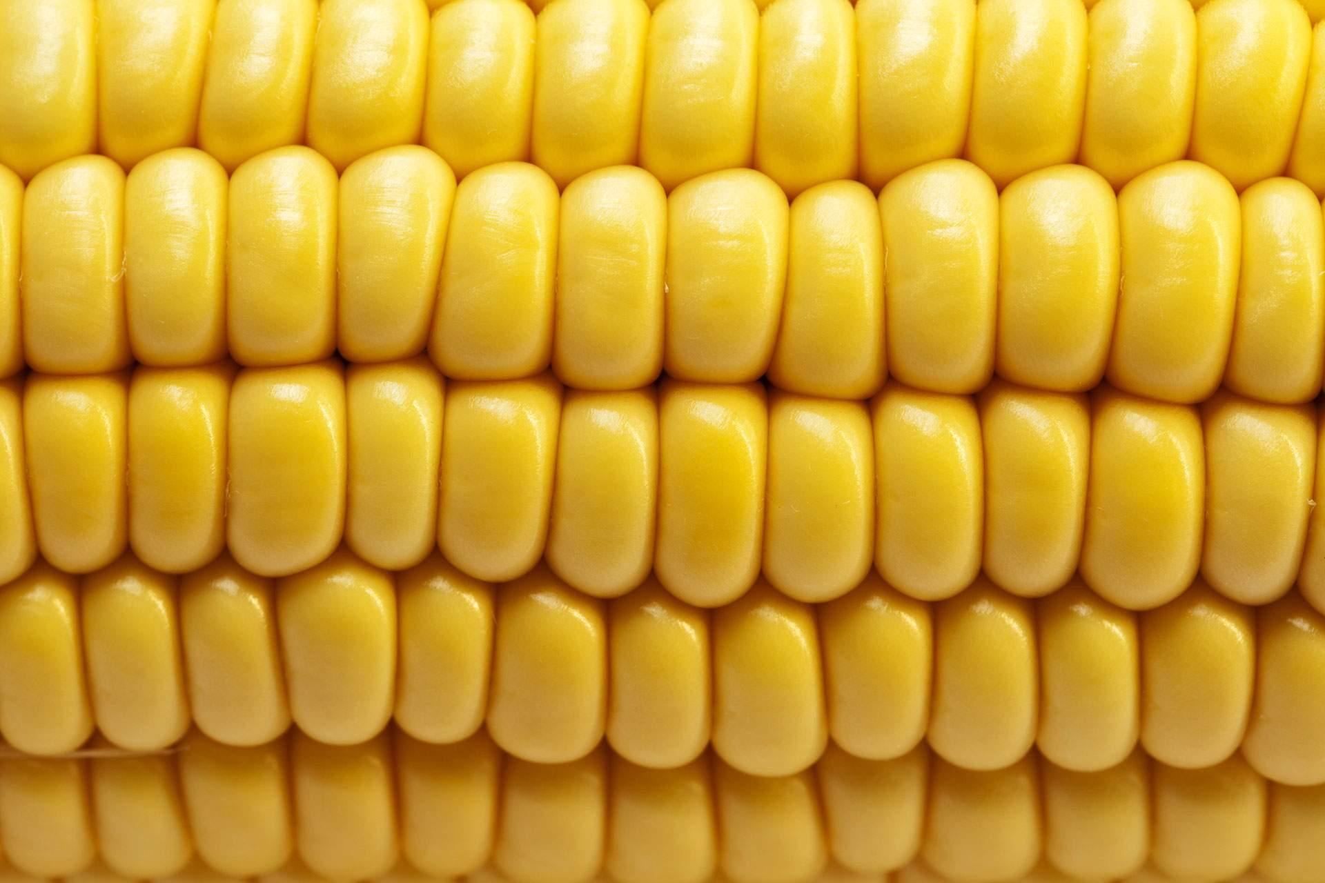 Топ 7 лучших препаратов для обработки кукурузы гербицидами, правила
