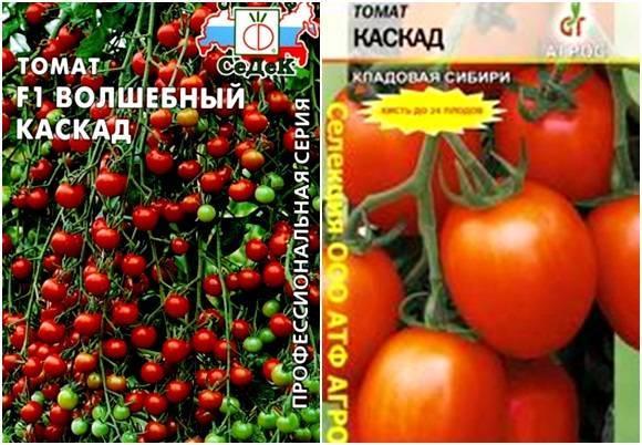 Томат каскад: описание сорта, фото, отзывы, характеристика, урожайность