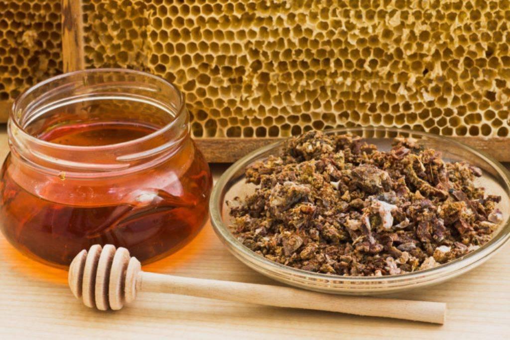 Мед с прополисом: почему он полезен?