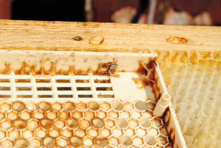 Самые распространенные способы вывода пчелиных маток