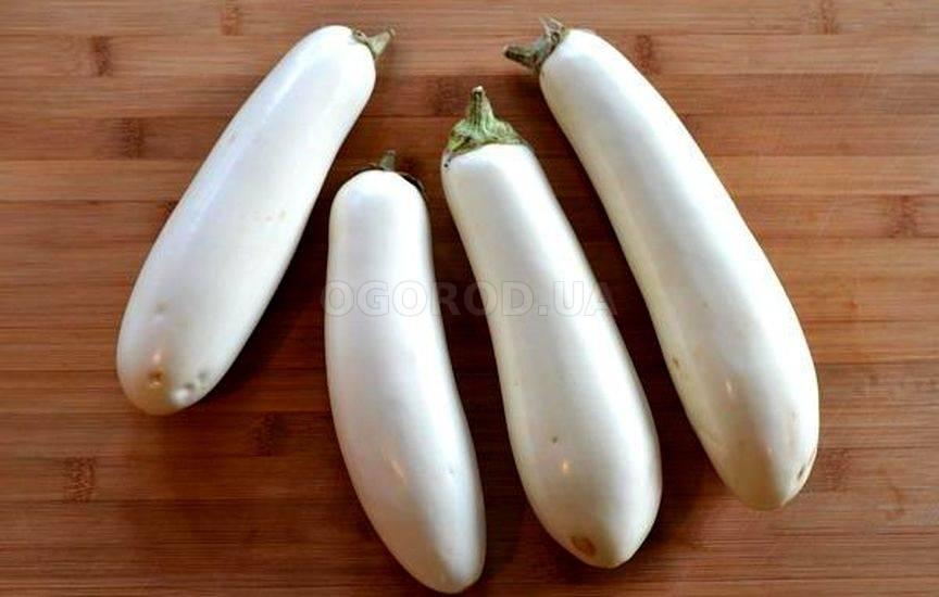 Гибриды белых баклажанов