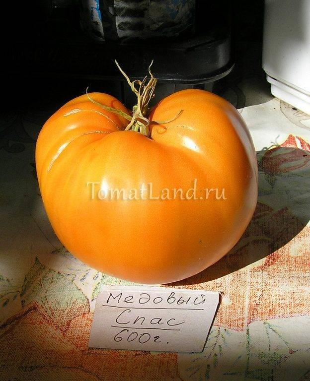 Помидоры «медовый спас»: характеристика, особенности выращивания