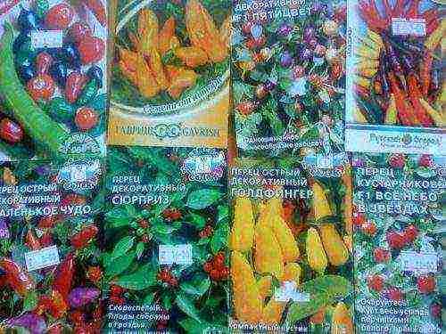 Разнообразие сортов перца острого. все от огородного до комнатного