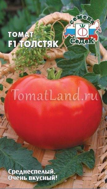 Фото, отзывы, описание, характеристика и урожайность сорта томата «толстые щечки»