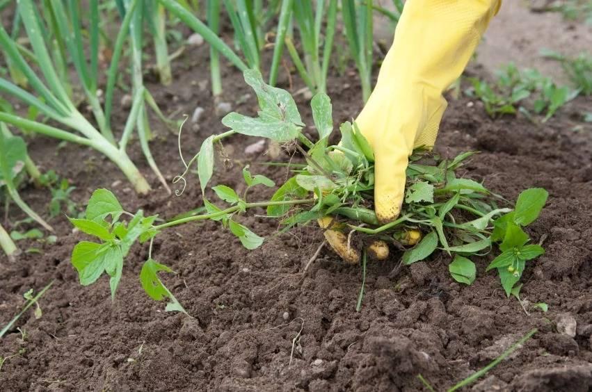 Можно ли уничтожить траву на участке навсегда: препараты и народные средства