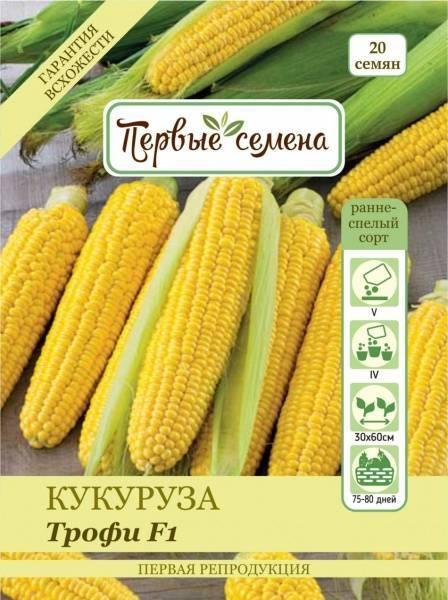Кукуруза – выращивание и уход