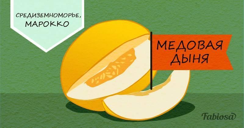 Как выбрать сладкую и спелую дыню