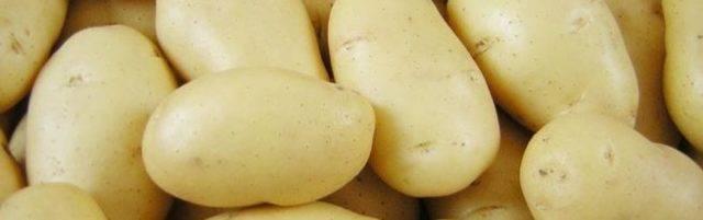 Сорт картофеля тулеевский: описание, отзывы