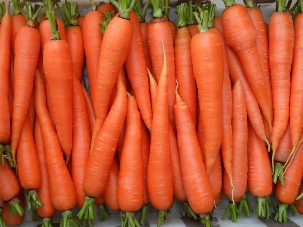 Какие сорта моркови выращивать в подмосковье?