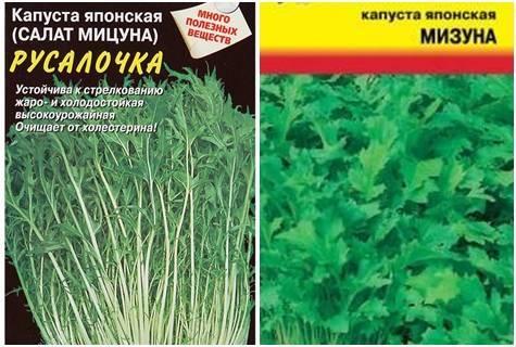 Мизуна – экзотическая японская листовая капуста. внешний вид растения, правила выращивания, плюсы, минусы