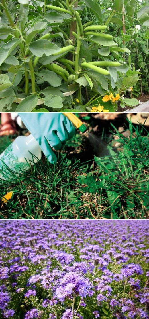 """Как избавиться от сорняков – секреты """"чистых"""" грядок"""