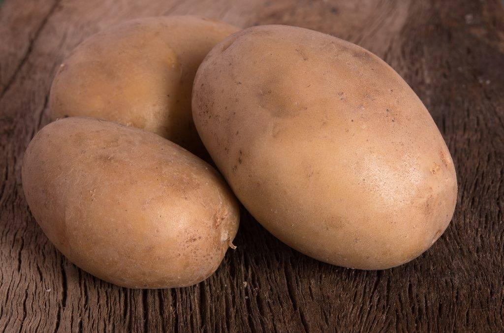 Картофель агрия — характеристика, описание, отзывы