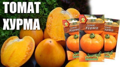 Томат «хурма»: описание и характеристика сорта, выращивание и уход