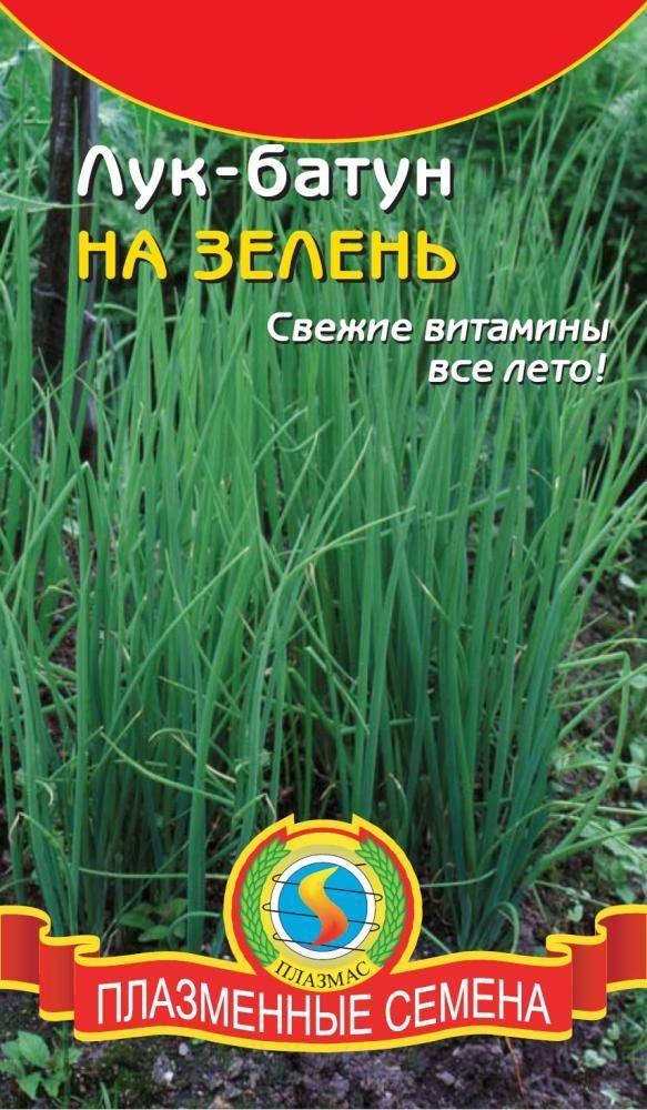 Лук-батун апрельский посадка и уход, выращивание