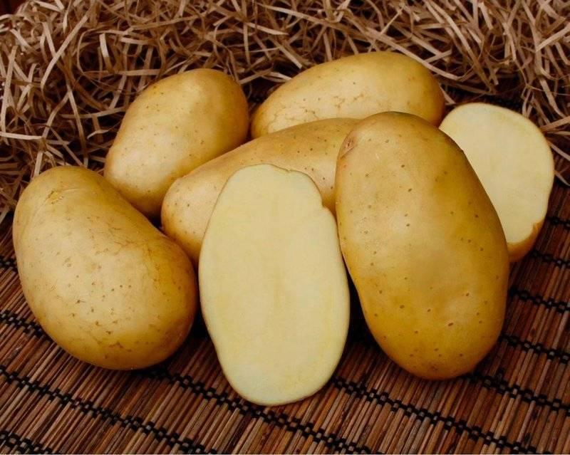 Картофель голубизна: разбираем со всех сторон