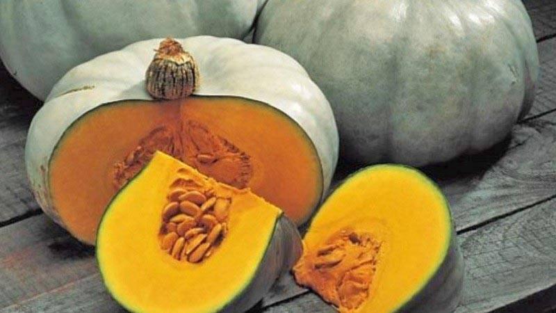 Тыква волжская серая: описание, особенности выращивания и использования