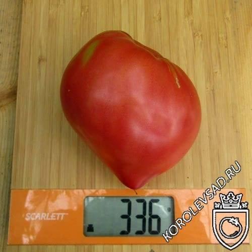 Бравый сержант пеппер: оригинальный томат, его описание и отзывы о выращивании