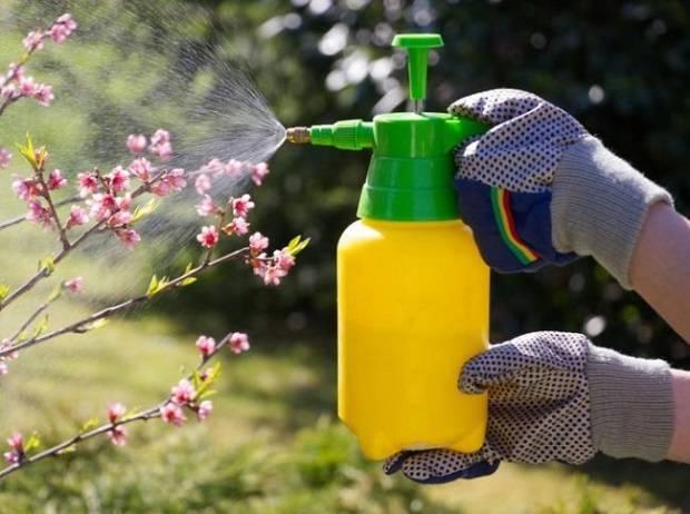 Подкормка для огурцов. выращивание огурцов в открытом грунте и теплице